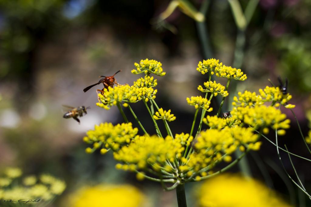 Bugs, I like.