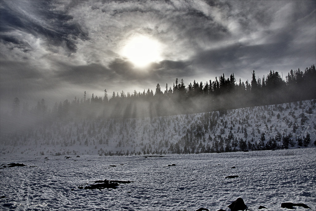 A foggy afternoon at the White River East Sno Park