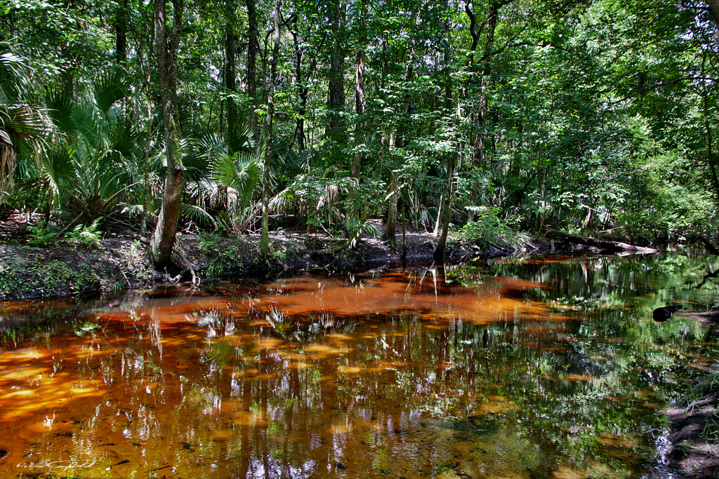 Reflections on a summer stroll along Soldier's Creek. Spring Hammock Preserve, Florida - 2015